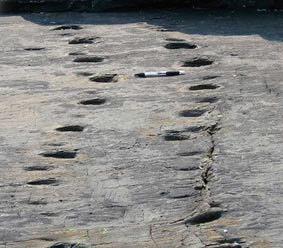 Tetrapod footprints