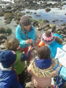 Sea Synergy marine walks