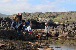 Seaweed tours kerry